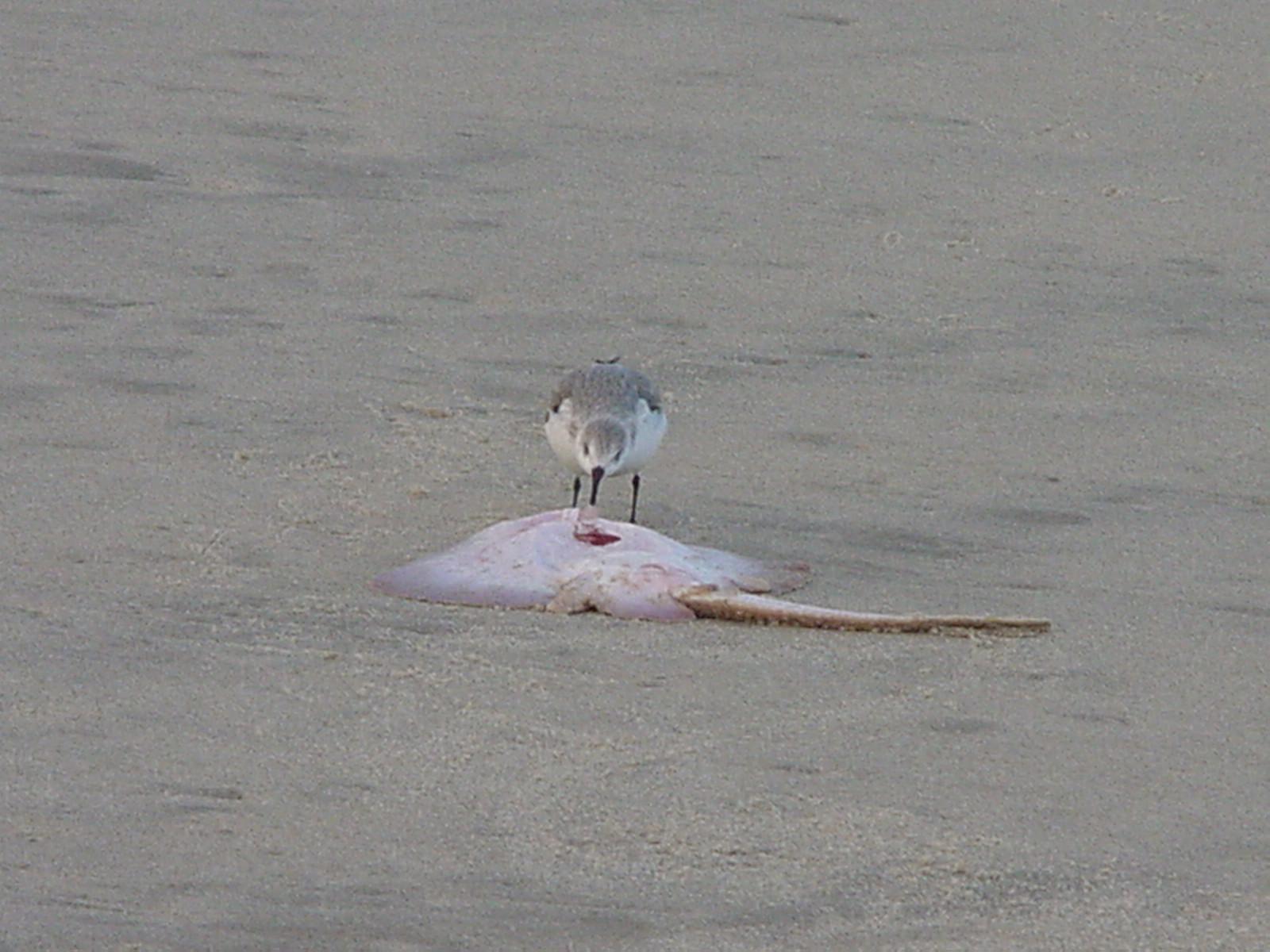 Beach New Jersey Sandy Hook